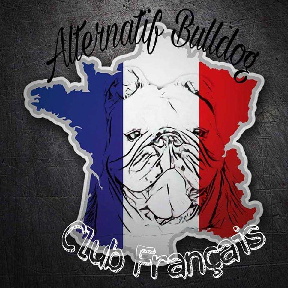 ALTERNATIF BULLDOG CLUB FRANCAIS